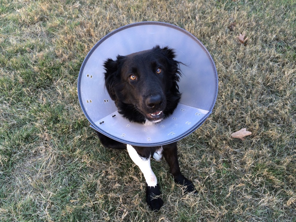 cone-of-shame-2093433_1920