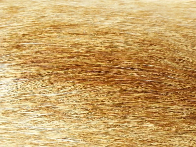 Cat hair texture background