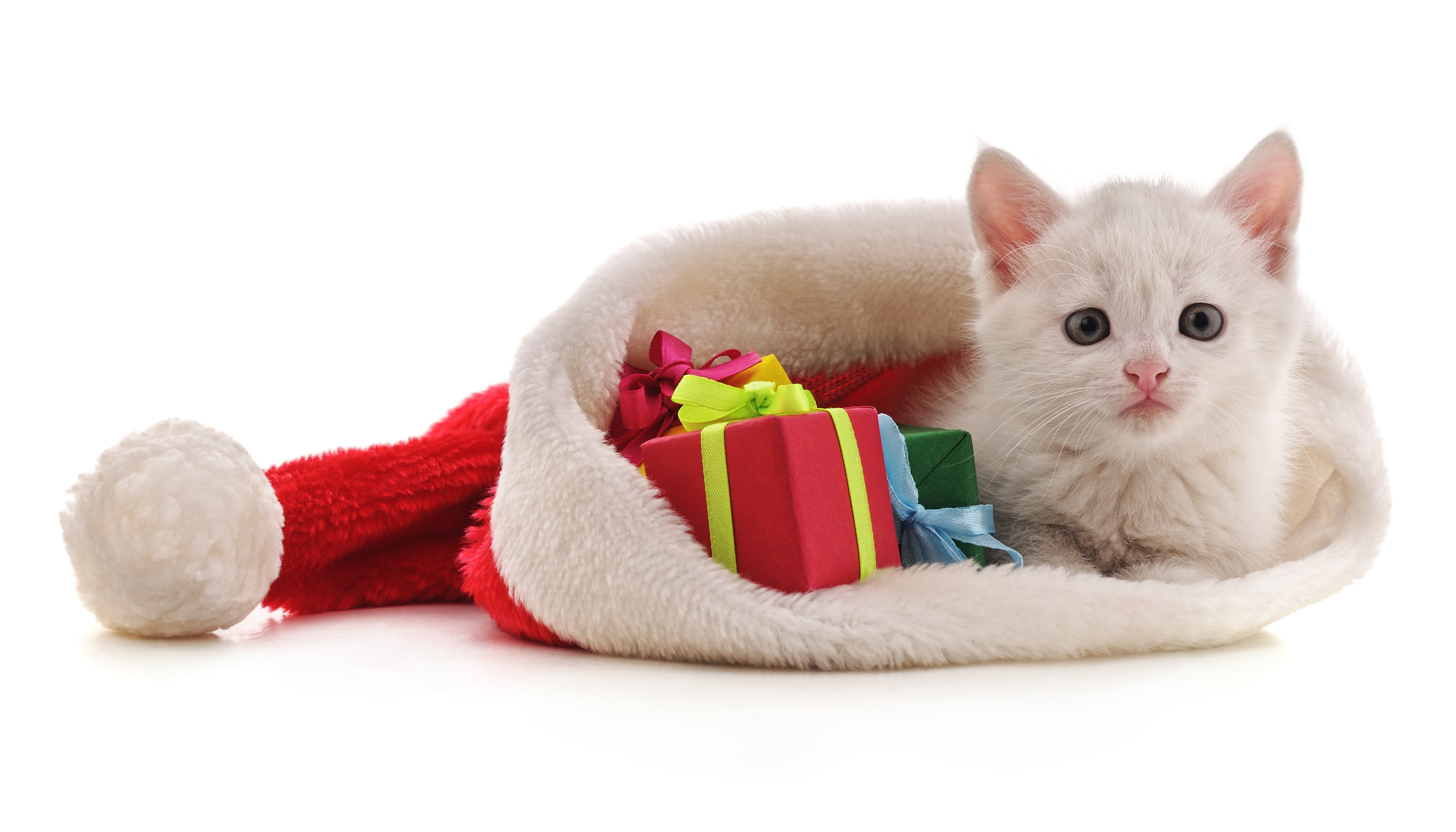 Kitten with Christmas gifts.